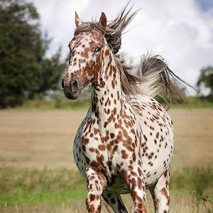 Freckled Horse