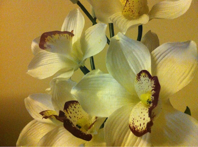 Public domain picture plastic orchids