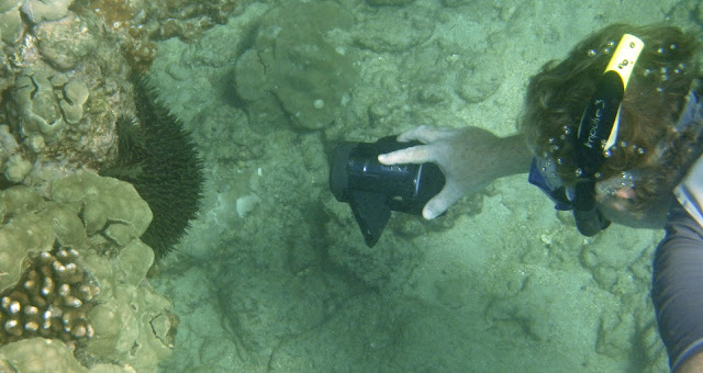 Bill filming a crown of thorns sea star.
