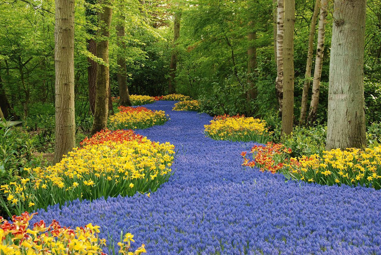 Curiosidades del mundo parque keukenhof holanda for Fotos de jardines preciosos