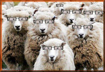 how smart are sheep essay Edit article how to not be a sheep people are sheep they're a face in the crowd that no one can see i hate to be the one to say it, but someone had to break the news.