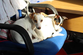 What do you mean, this isn't our chair?!!!!