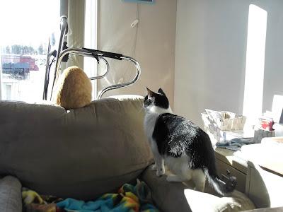 Cat sneaking