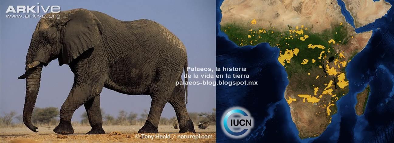 Palaeos, la historia de la Vida en la Tierra: ¿Sabías que? Elefantes