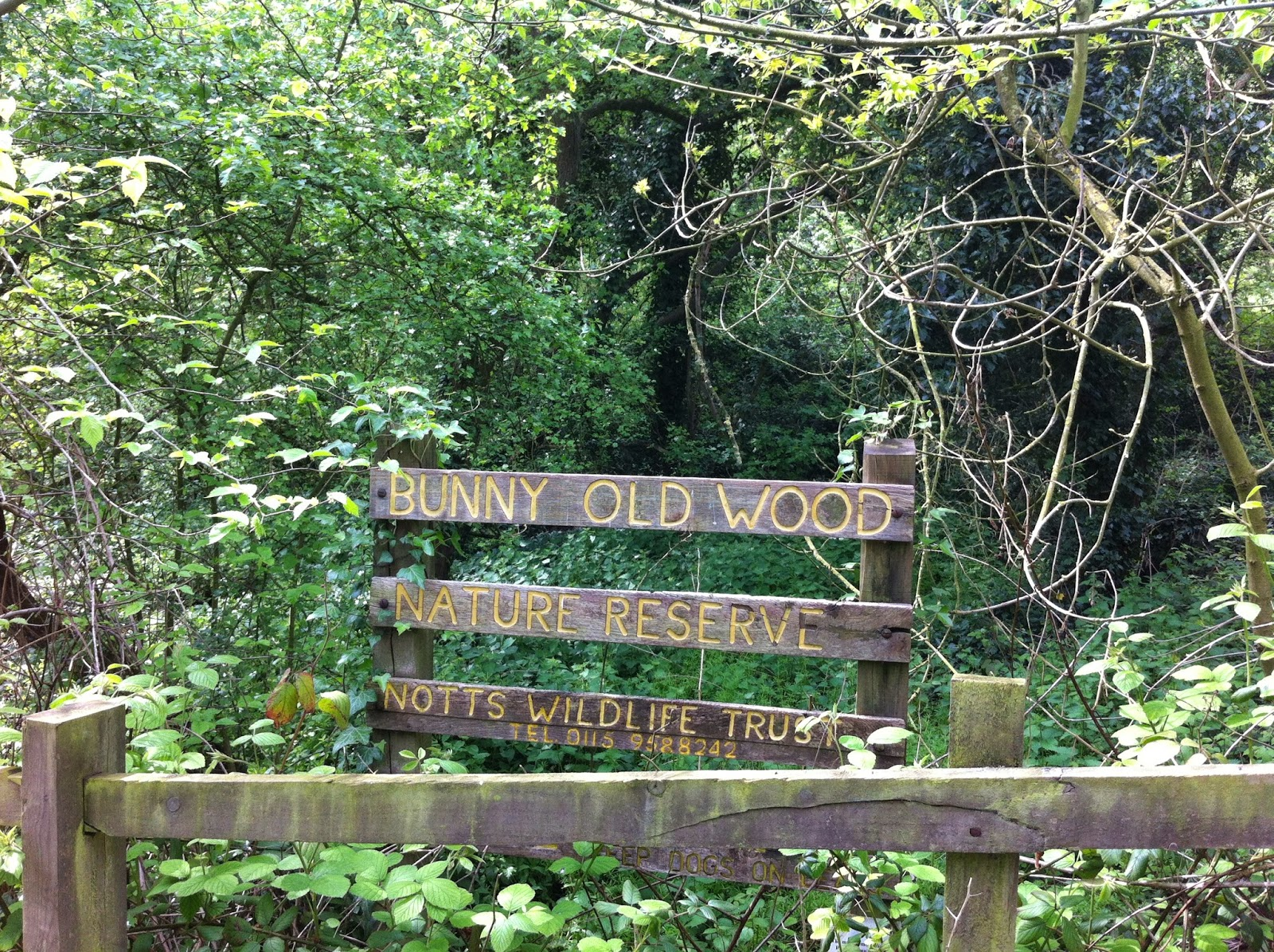 Old Bunny Wood
