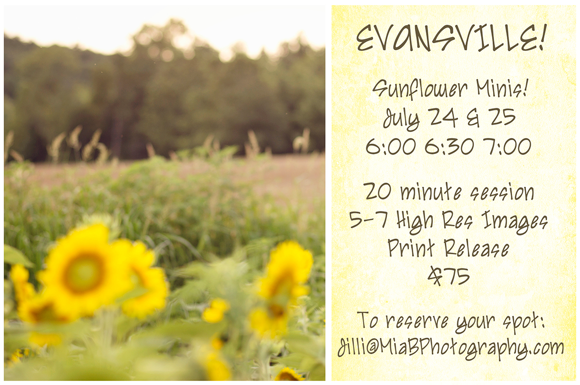 Mia bella photography sunflower mini sessions in evansville indiana