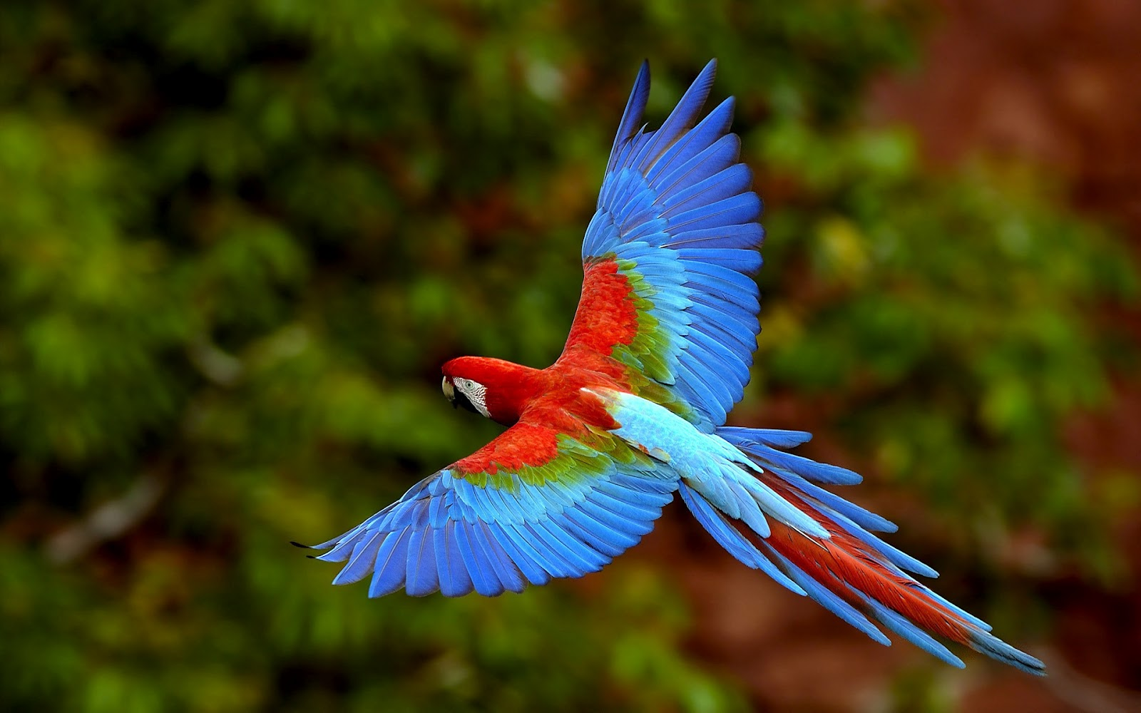 wildlife of the world beautiful parrot wallpapers 2012