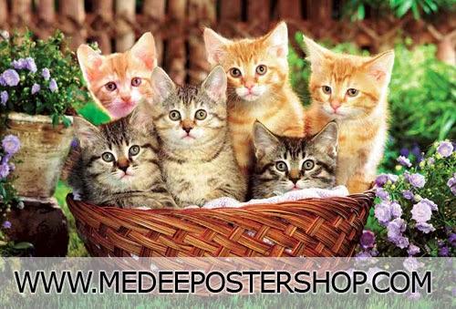 ภาพแมวน่ารัก