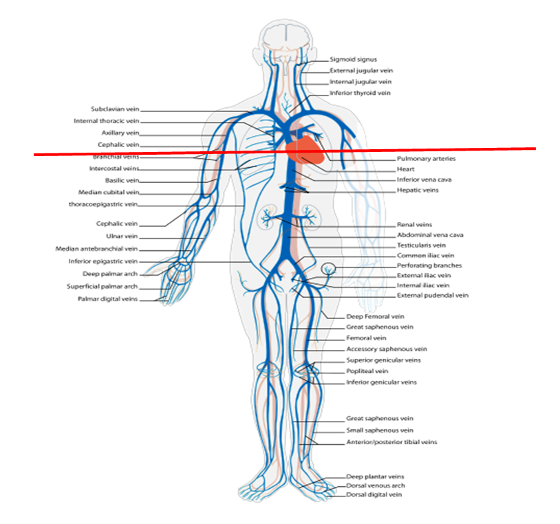 Mbbs Medicine Humanity First The Veins