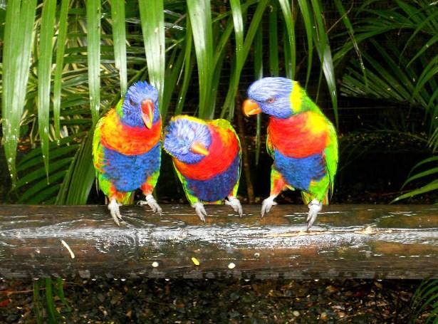 Les Petits Paradis De Manon Jardin Botanique De Deshaies Deshaies Guadeloupe