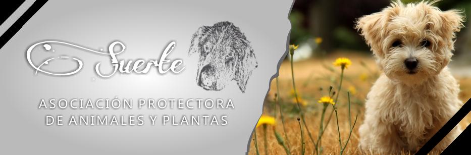 ASOCIACIÓN PROTECTORA DE ANIMALES Y PLANTAS SUERTE