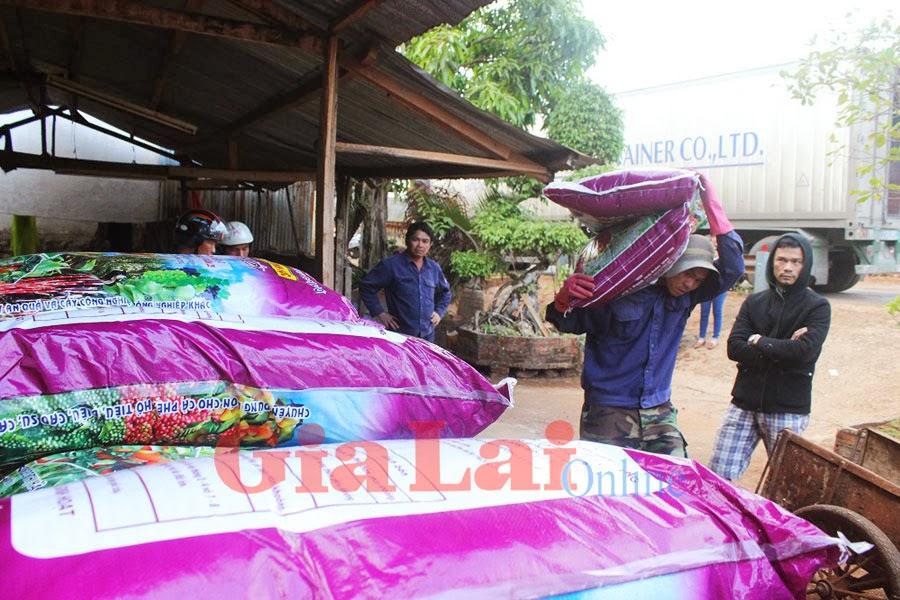 Gia Lai: Giúp nông dân làm giàu