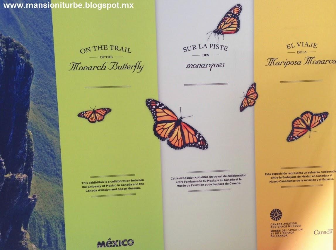 Exposición el Viaje de las Mariposas Monarca