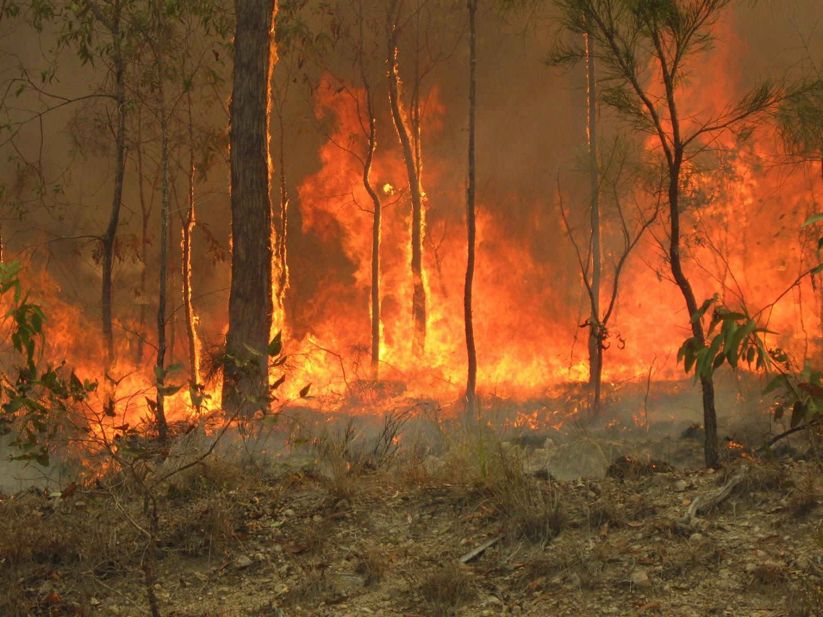 intelliblog  in praise of bushfires