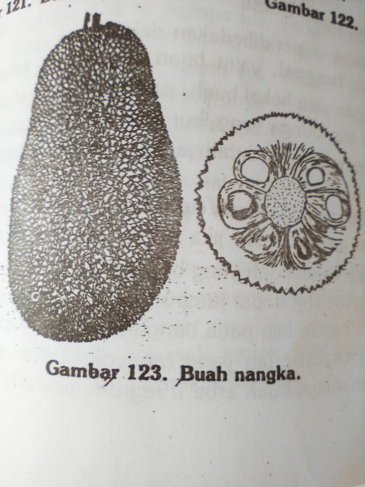 Bagian bagian bunga pada umumnya buah hanya akan terbentuk sesudah terjadi penyerbukan dan pembuahan pada bunga walaupun demikian mungkin pula buah terbentuk tanpa ada ccuart Image collections