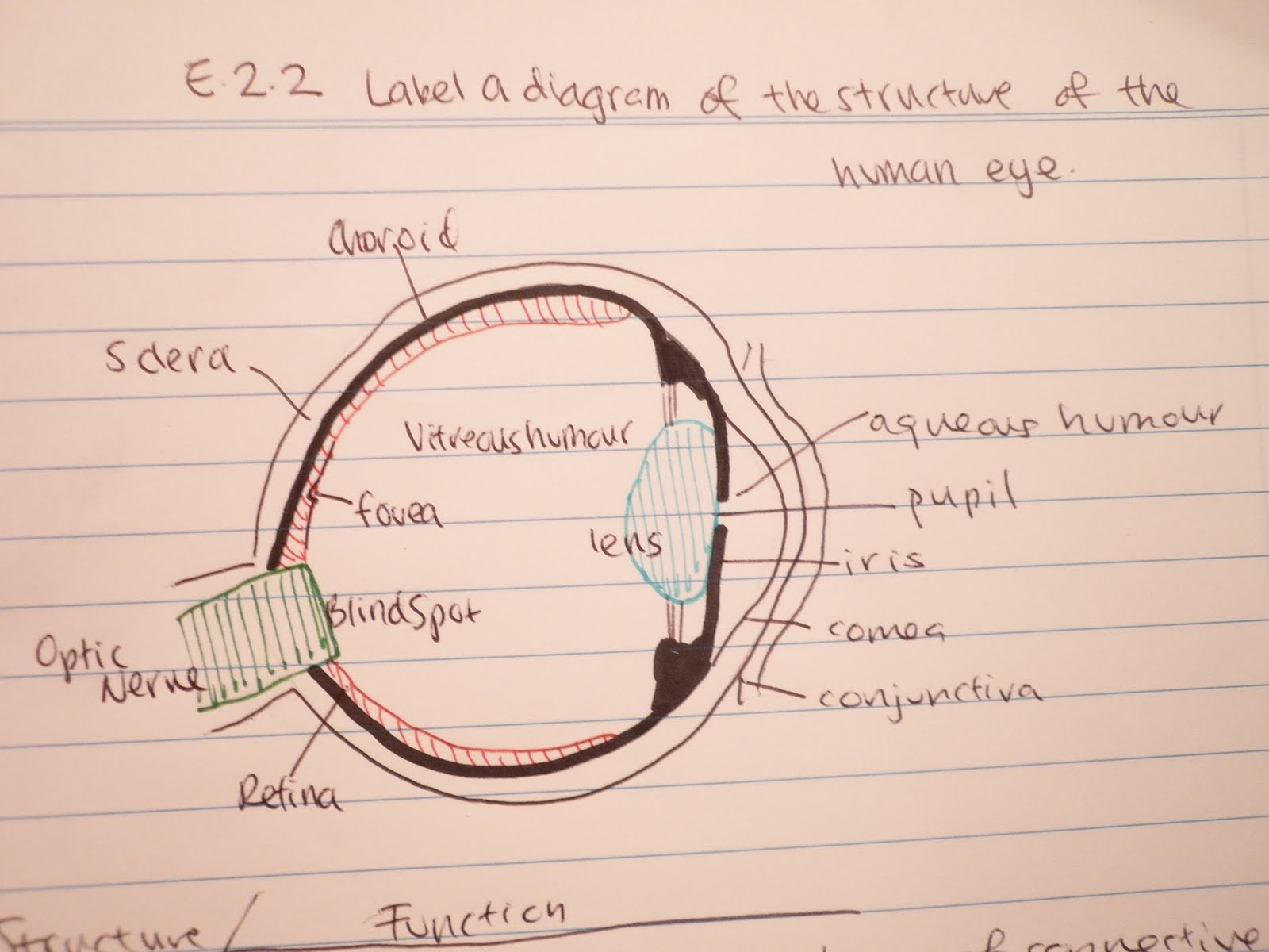 Tiffanys biology blog e22 label a diagram of the structure of e22 label a diagram of the structure of the human eye ccuart Images