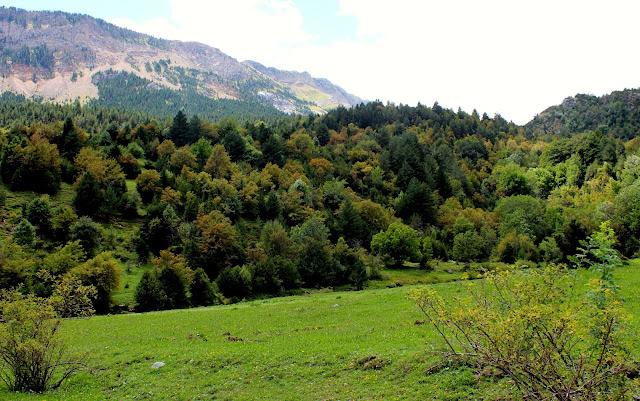 Bosques de pinos  y tejos