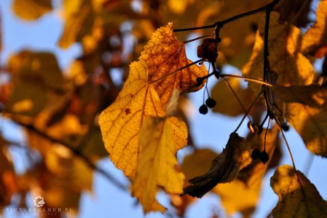 picturecloud - blog fotograficzny
