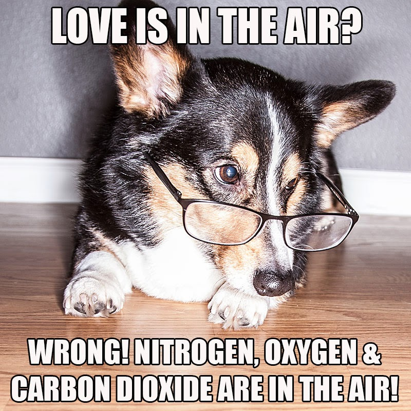 animal valentines day memes - Valentine's Day I'll just be over here making dog memes