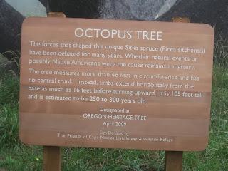 The Octopus, Pohon Cemara Mirip Gurita