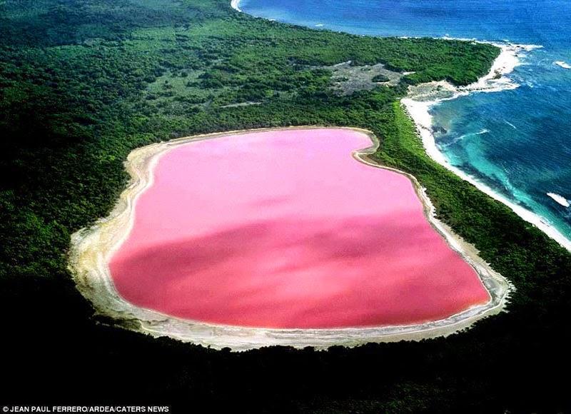 danau pink
