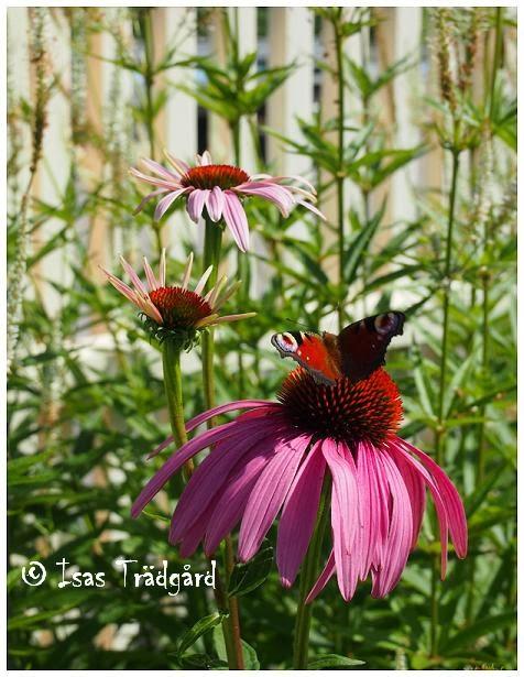 Somriga bilder från trädgården !