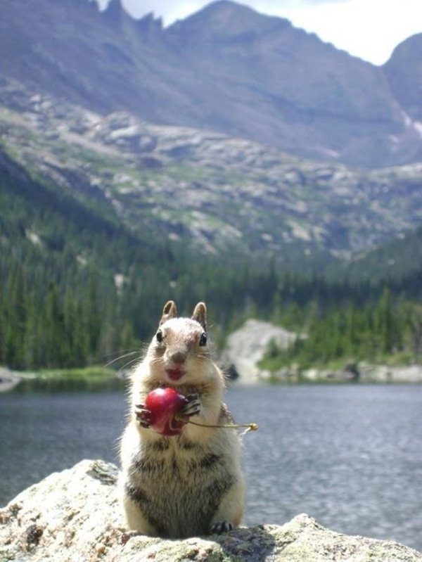 funny animal pics, animal photos, lipstick squirrel