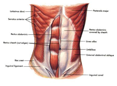 Tips on how to Reinforce Your current Stomach Muscle tissue Class