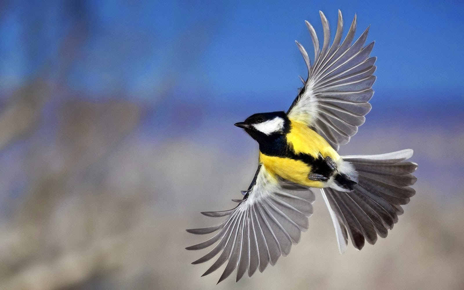 how birds fly How high can birds fly - does it seem like birds can fly pretty high up in the air here are the facts on just how high they can go: on a day-to-day basis, most birds usually fly below 500 feet have you ever been in a tall.