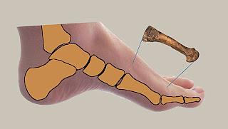 piede di Lucy
