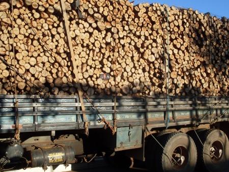 Polícia Ambiental apreende cinco toneladas de madeira sem documentação