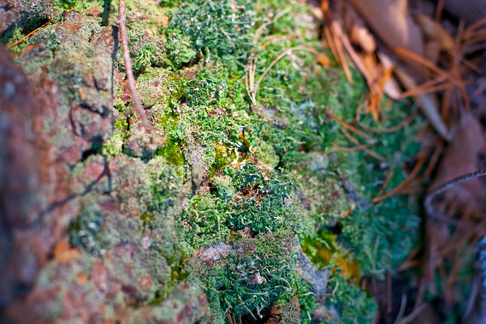 Moss and lichen on a tree trunk.