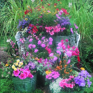 http://www.sunset.com/garden/flowers-plants/plant-country-garden-buckets-00400000016388/