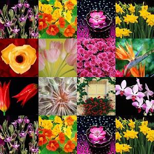 Há uma primavera em cada vida: