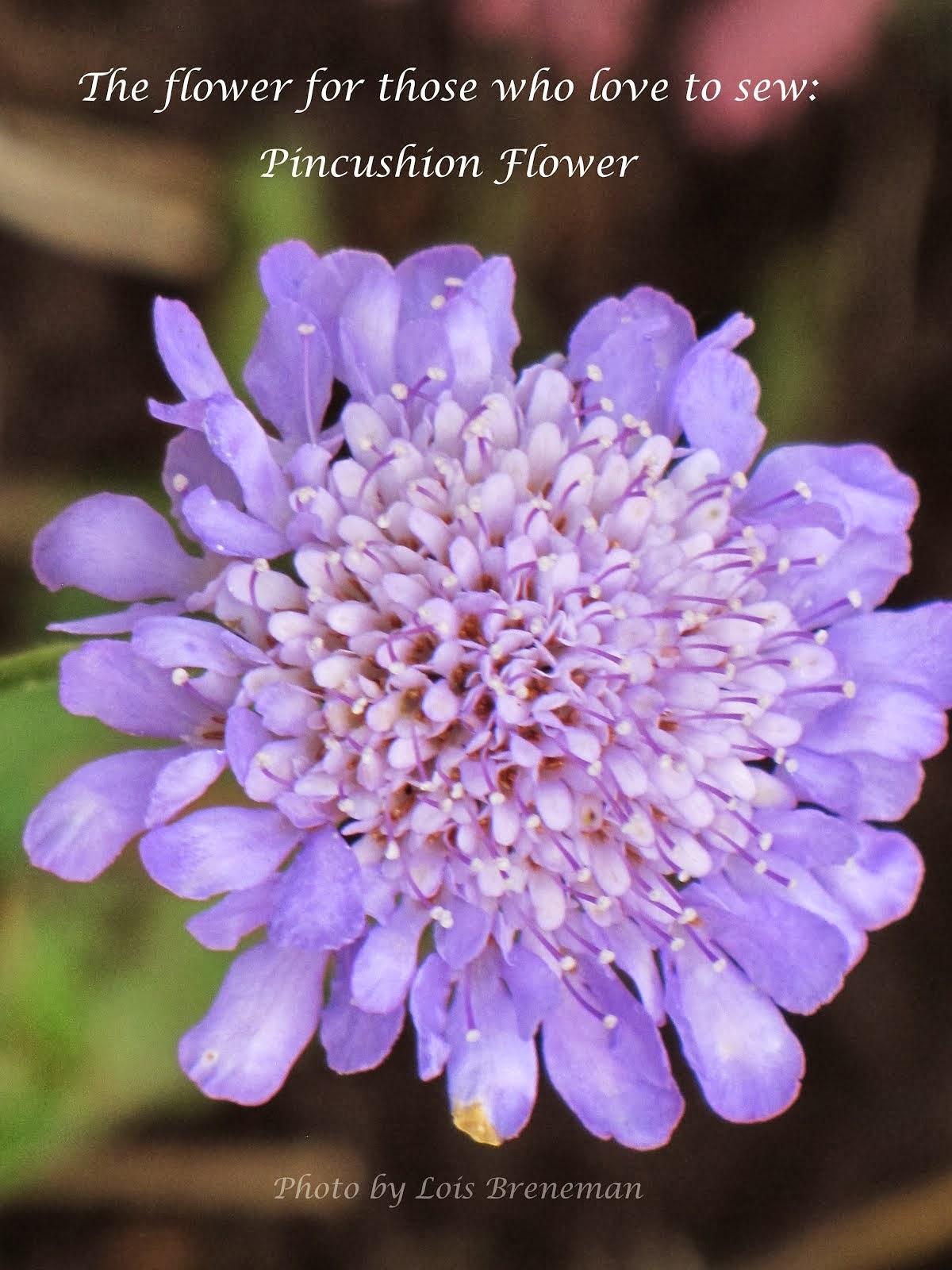 Pincushiopn Flower