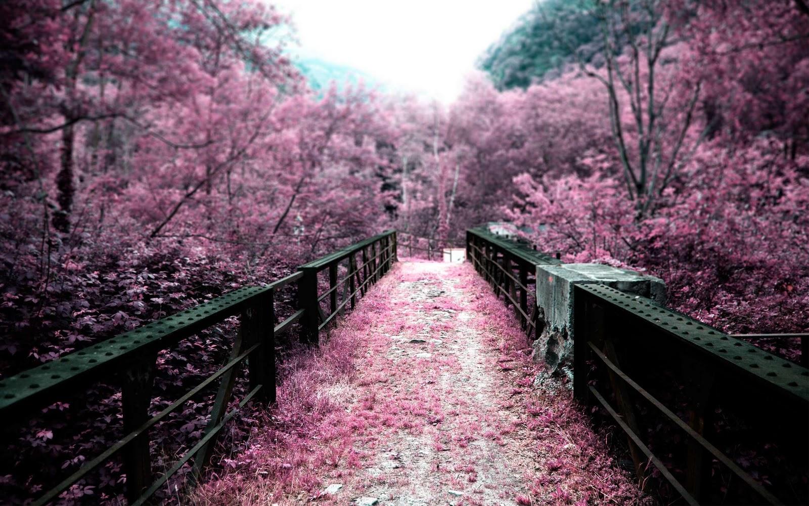http://1.bp.blogspot.com/-6cb3w7zH6RI/TnXWU4sGWTI/AAAAAAAAAmg/ty0JdM2fWNY/s1600/Bridge+in+Scanolera+by+Robert+Anderson.jpg