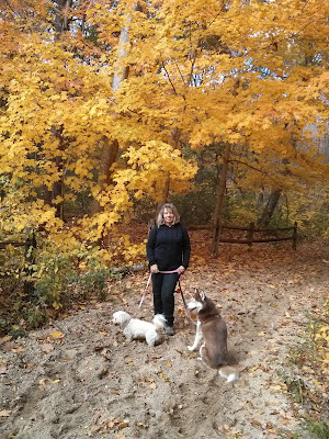 Catching the fire of Fall on a hike with my dogs at West Hills park, Huntington NY
