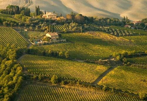 http://1.bp.blogspot.com/-6chfe9eEsik/Tn6WuE298kI/AAAAAAAAEas/a8VHZJHPlq0/s1600/montalcino+vineyard+4.jpg