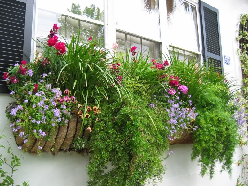 ewa in the garden 13 best window box ideas. Black Bedroom Furniture Sets. Home Design Ideas
