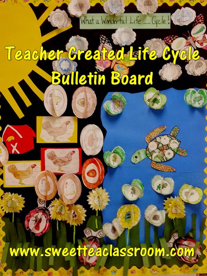 life cycle bulletin board
