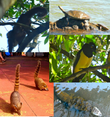 wildlife in Iguazu