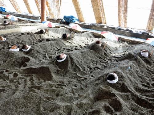 Ibusuki Sand Bath, Kagoshima, Kyushu