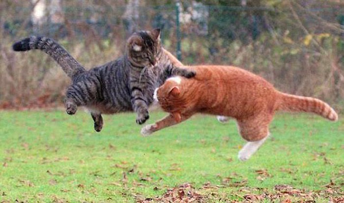 Flying Cats Amazing Photos