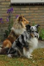 Mijn honden