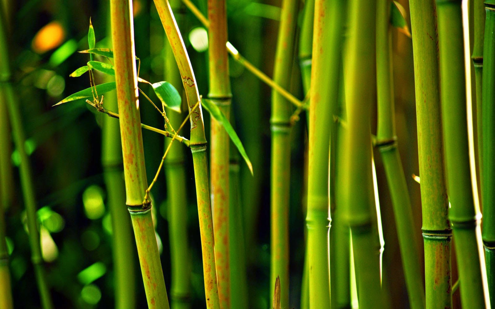 Wallpapers Bamboo Wallpapers