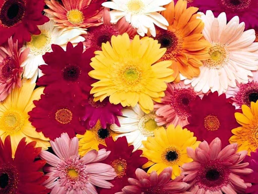 Flores resistentes ao sol  Nippon Jardinagem