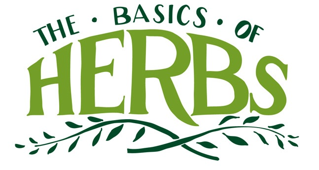 illustration on the basics of herbs