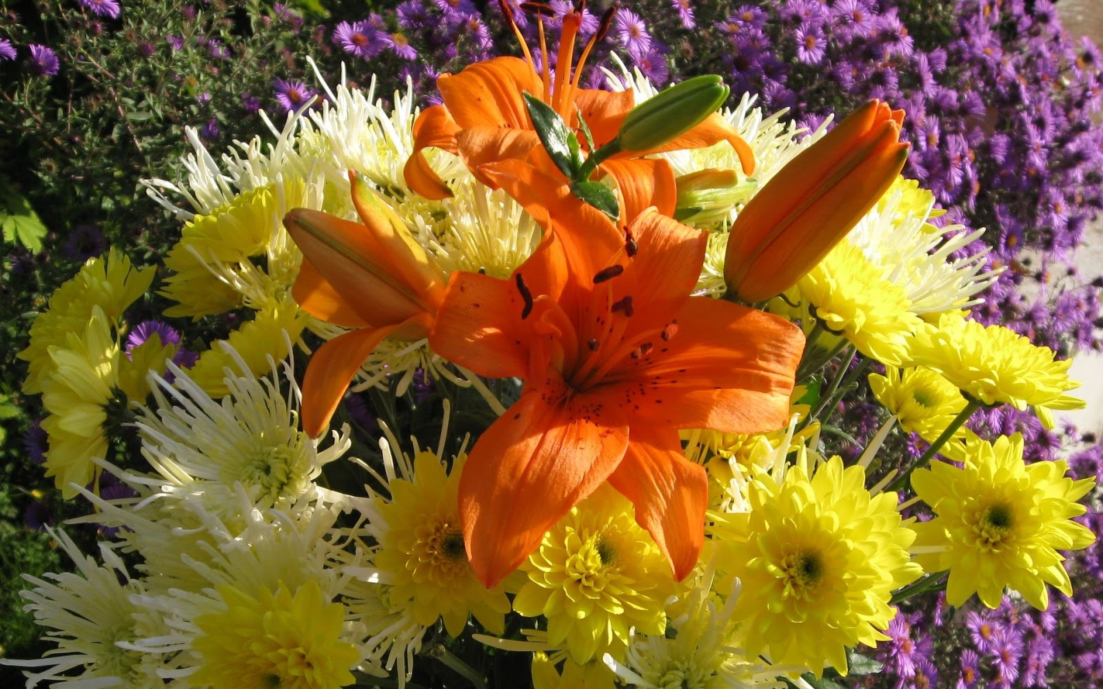 Hd Photos Of Aster Flower Bouquets