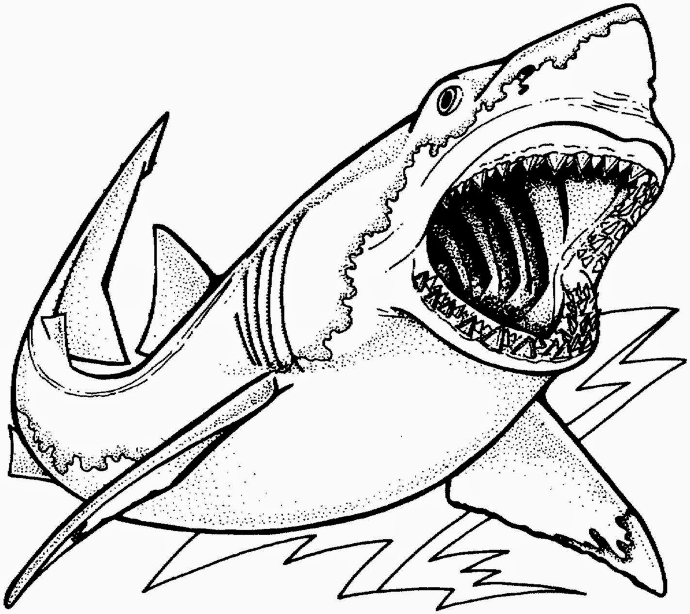 Co co coloring sheets free for kids - Co Coloring Printables Animals Tiger Shark Coloring Page Coloring Pages Sharks Coloring Pages Printable
