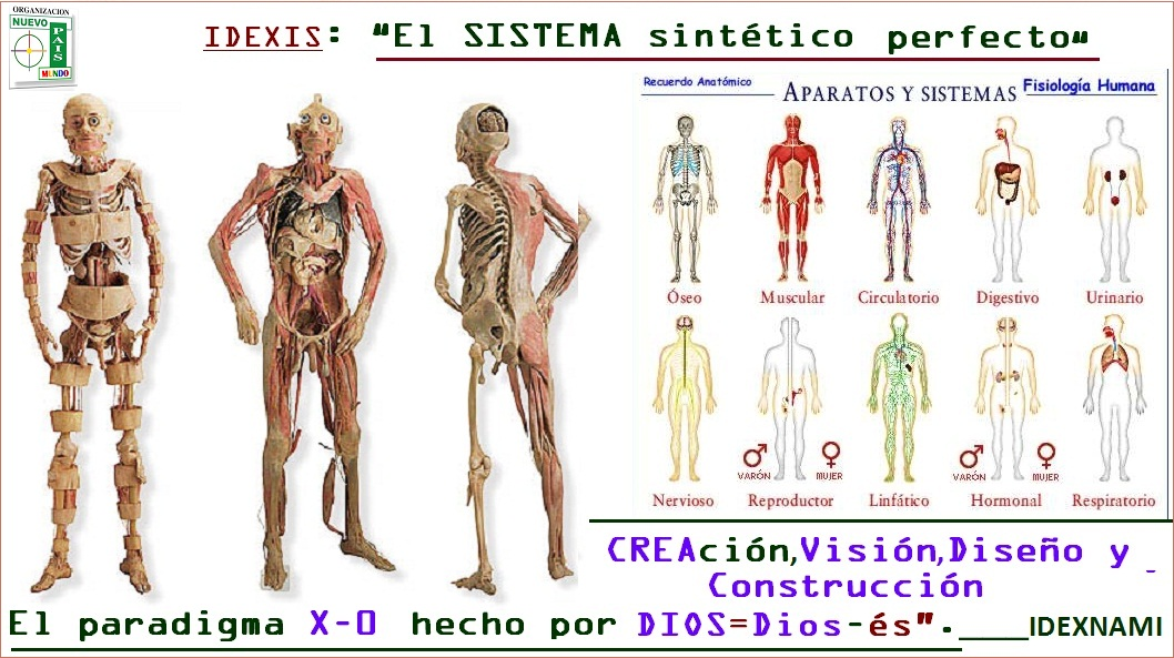 Magnífico Todos Los Sistemas Corporales Patrón - Anatomía de Las ...